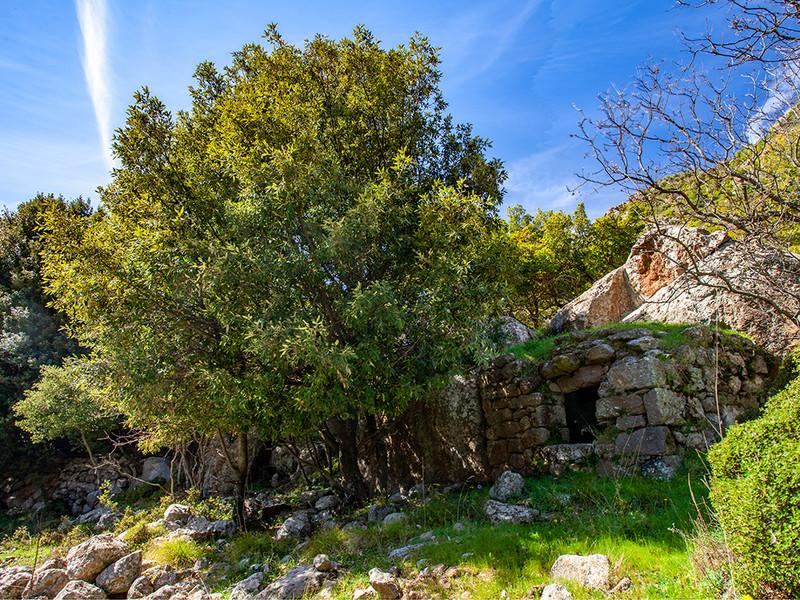 Ancient storage room (Ambari) (c) Tobias Schorr 2020
