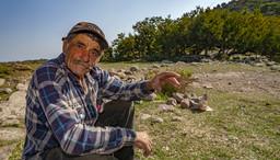 Viele Jahre begegnete man, bis zu seinem Tod in 2012, dem Bergziegenhirten Jiorgos Dimitriou. Unvergeßlich waren seine Erzählungenüber die jüngere Geschichte Methanas. (c) Tobias Schorr