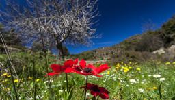 Blumenwiese der Hochebene Sterna Gambrou. (c) Tobias Schorr