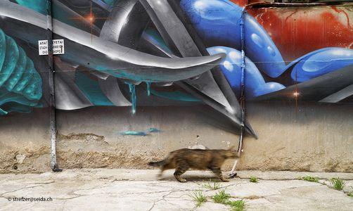 Katze und Graffiti