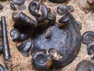 Epidaurus ist nicht nur für sein Theater besuchenswert, sondern auch, wegen seinen fossilen Ammoniten aus der Trias-Zeit