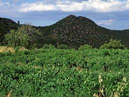 One of the Chiroma de Boukore lava domes. (c) Tobias Schorr