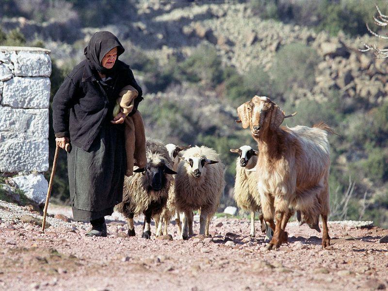 Eine ältere Frau aus Pano Mouska mit ihren Ziegen (c)Tobias Schorr