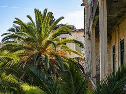 Die Palmen gaben dem Hotel ein besonderes Flair. (c) Tobias Schorr