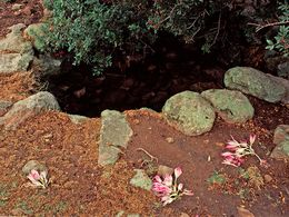 Crocus flowers at one of the old cisterns of the Loutesa plateau. October 1996. (c) Tobias Schorr