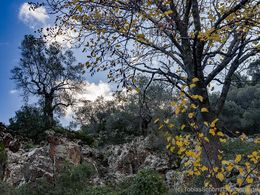 Autumn trees at al ittle crater. (c) Tobias Schorr