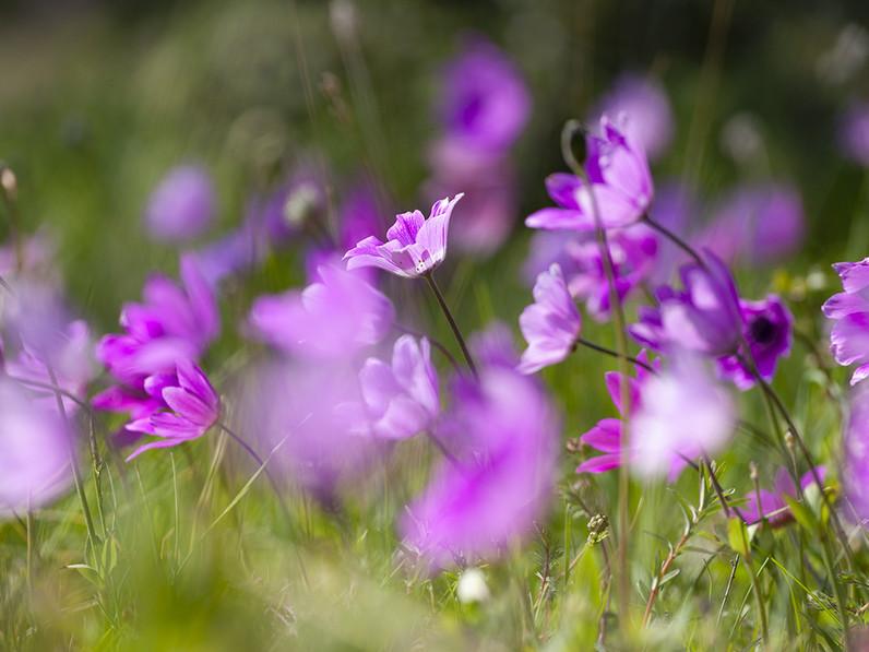 Frühlingsfotos - Methana im März / April