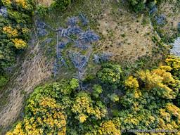 Vor ein paar Jahren hat ein Bauer illegal Bäume gefällt. Nun sind nur noch ihre Skelette zu sehen. Chelona/Methana. (c) Tobias Schorr