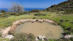 Weiter oben am Berg gibt es diese Wasserstelle, die ein Biotop für Amphibien ist. (c) Tobias Schorr