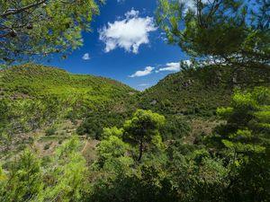 Τα πράσινα δάση των Μεθάνων είναι ένας θησαυρός που πρέπει να το προστατέψουμε με όλη την καρδιά μας!