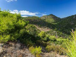 Auf dieser Route kommt man an vielen Vulkanen vorbei. Aber trotzdem ist alles grün und bewaldet. (c) Tobias Schorr