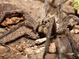 Eine der vielen Spinnenarten auf Methana