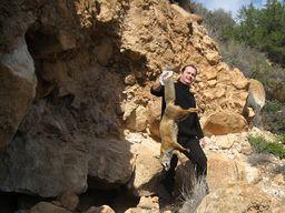 Ο Tobias Schorr βγάζει τη νεκρή αλεπού από την μοφέτα, ώστε να μην γίνει πειρασμός για τα σαρκοφάγα ζωά. (c) Αλεξάνδρα Τριανταφύλλου