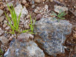 Fossile Korallen findet man an ein paar Stellen auf Asprovouni. (c) Tobias Schorr