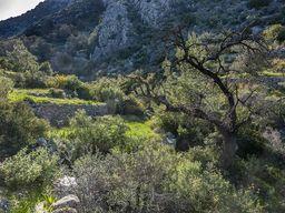 In diesem Tal verläuft die wichtigste geologische Störung Methanas. (c) Tobias Schorr